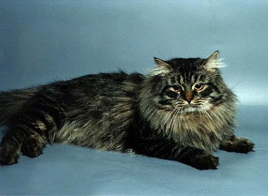 Фото кошек, кошки, фотографии кошек, картинки кошек.